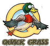 The Original Quack Grass